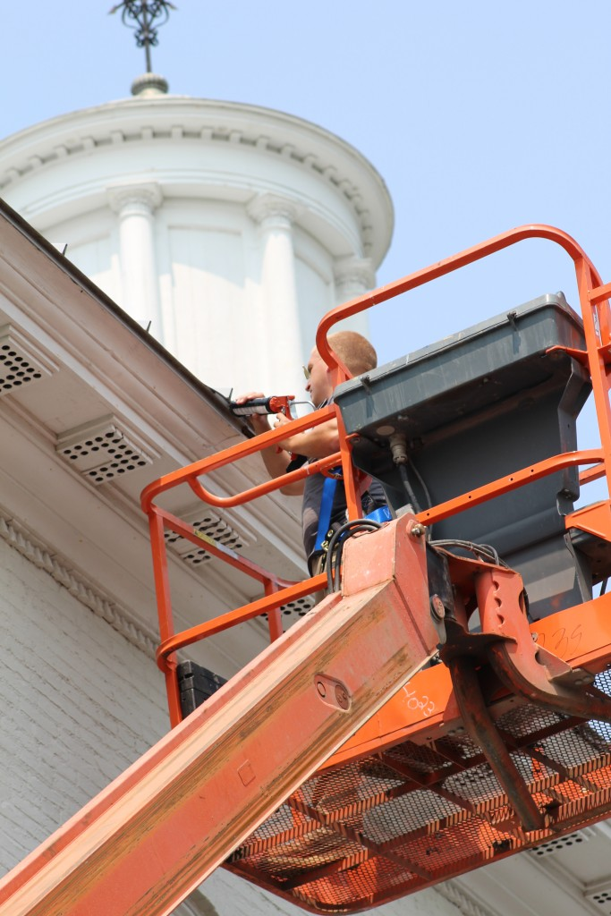 commercial wildlife removal Rochester