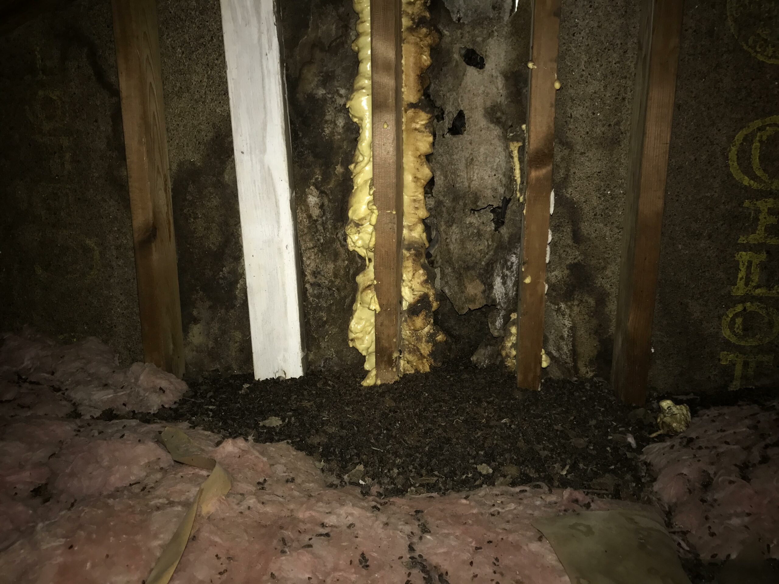 animal damage in attic Rochester