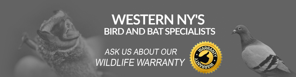 Bat and Bird Specialists